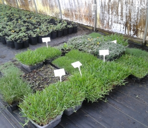 Samples of Different Types of Turf